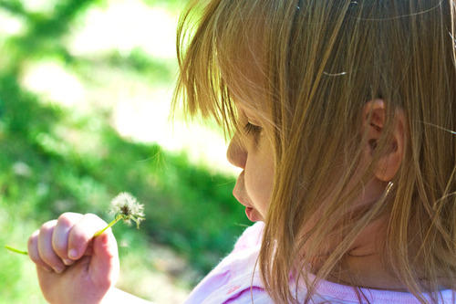 Caira blows on a dandelion