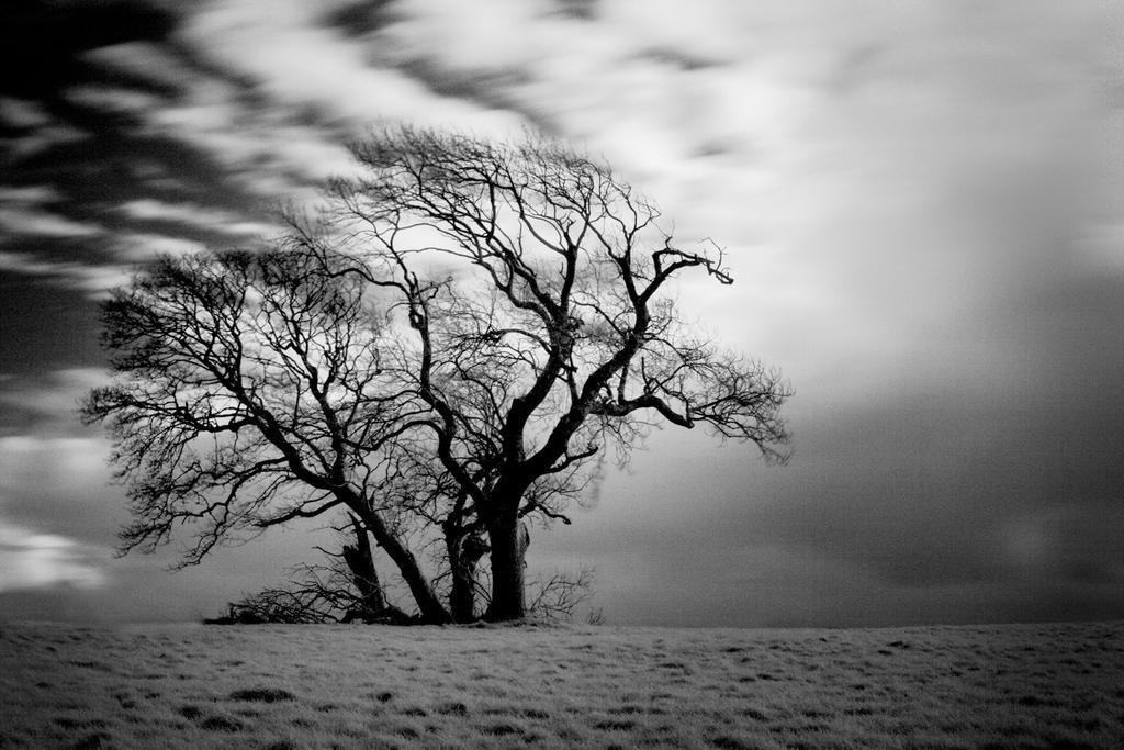 Renville tree from near in winter