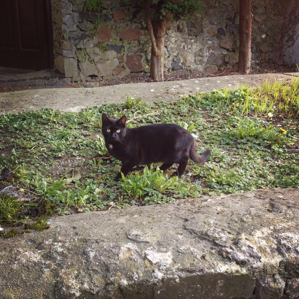 Black cat at Bowling Green