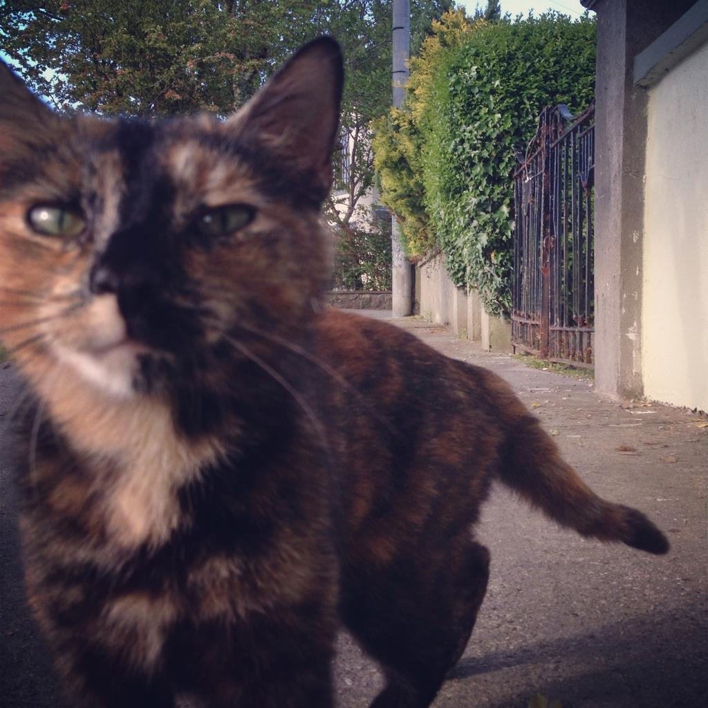 Tortiseshell cat on Canal Road