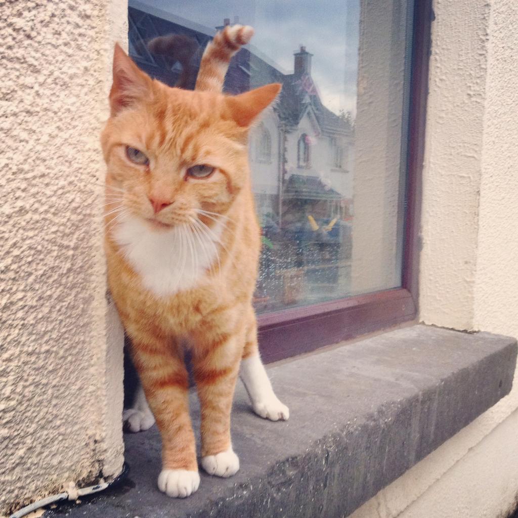 Ginger shitbag cat in Palmyra Park