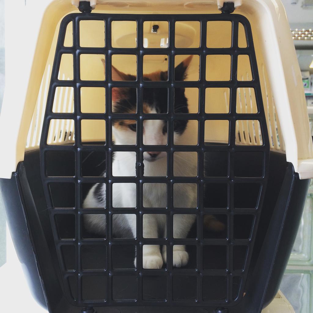 Killer at the vet for a checkup