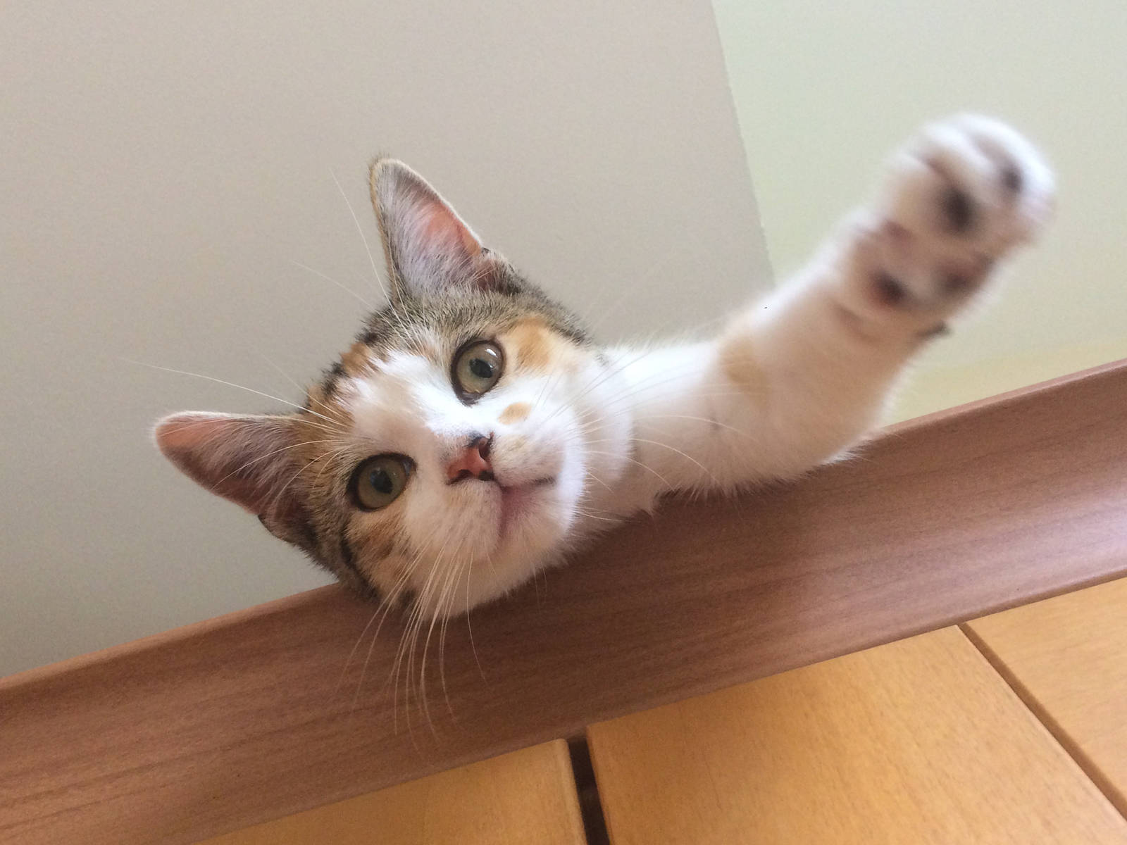 Kitter gives pleasent greeting
