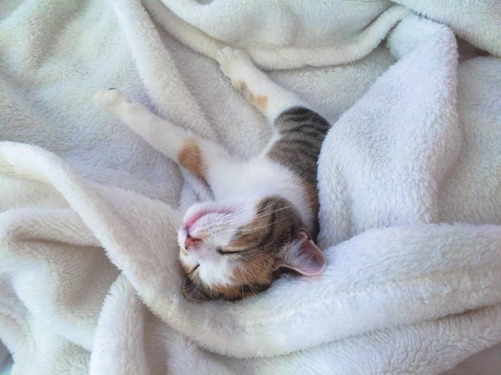 Sleeping Cookie