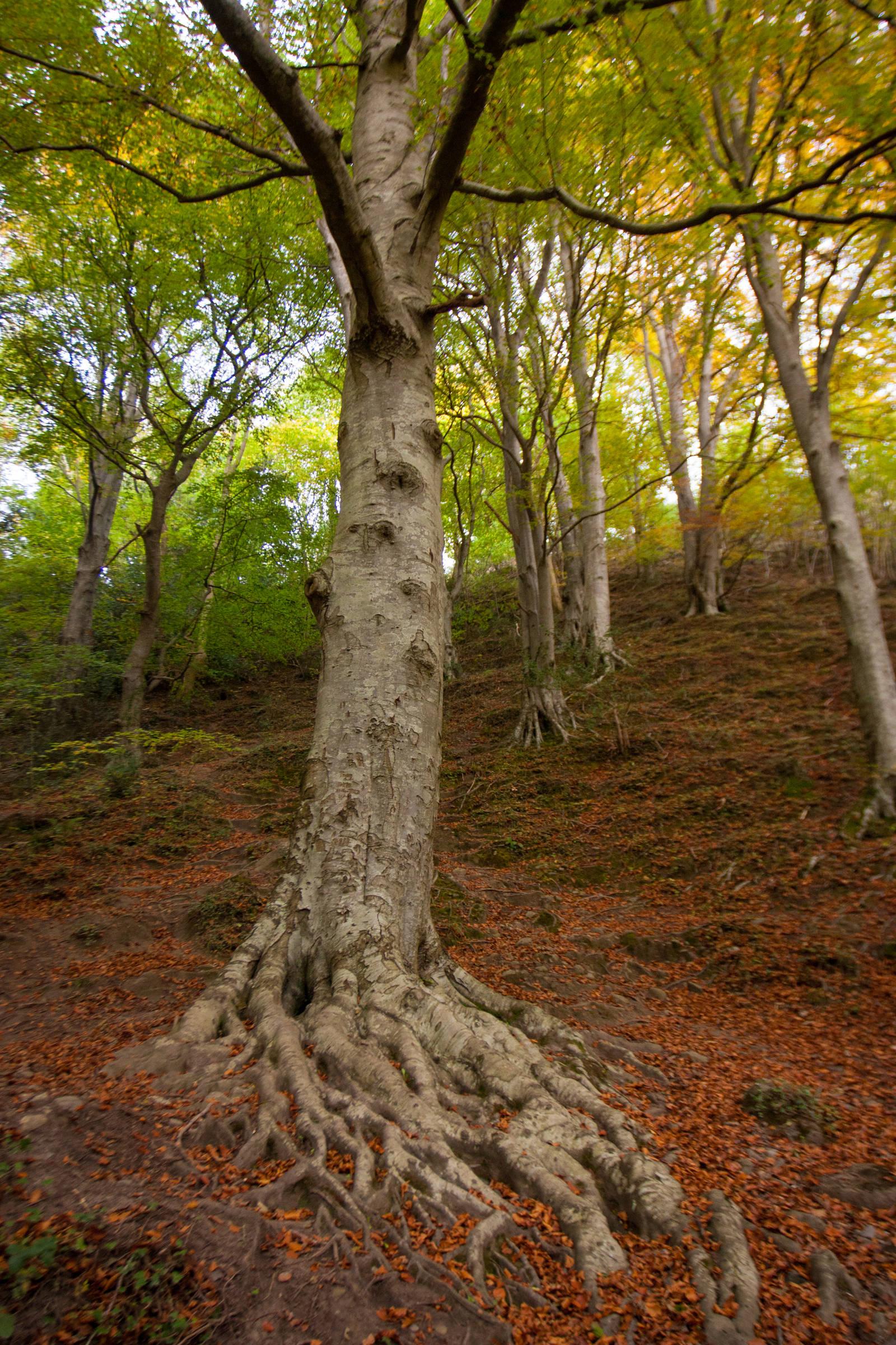 Tree in Knocksink Woods