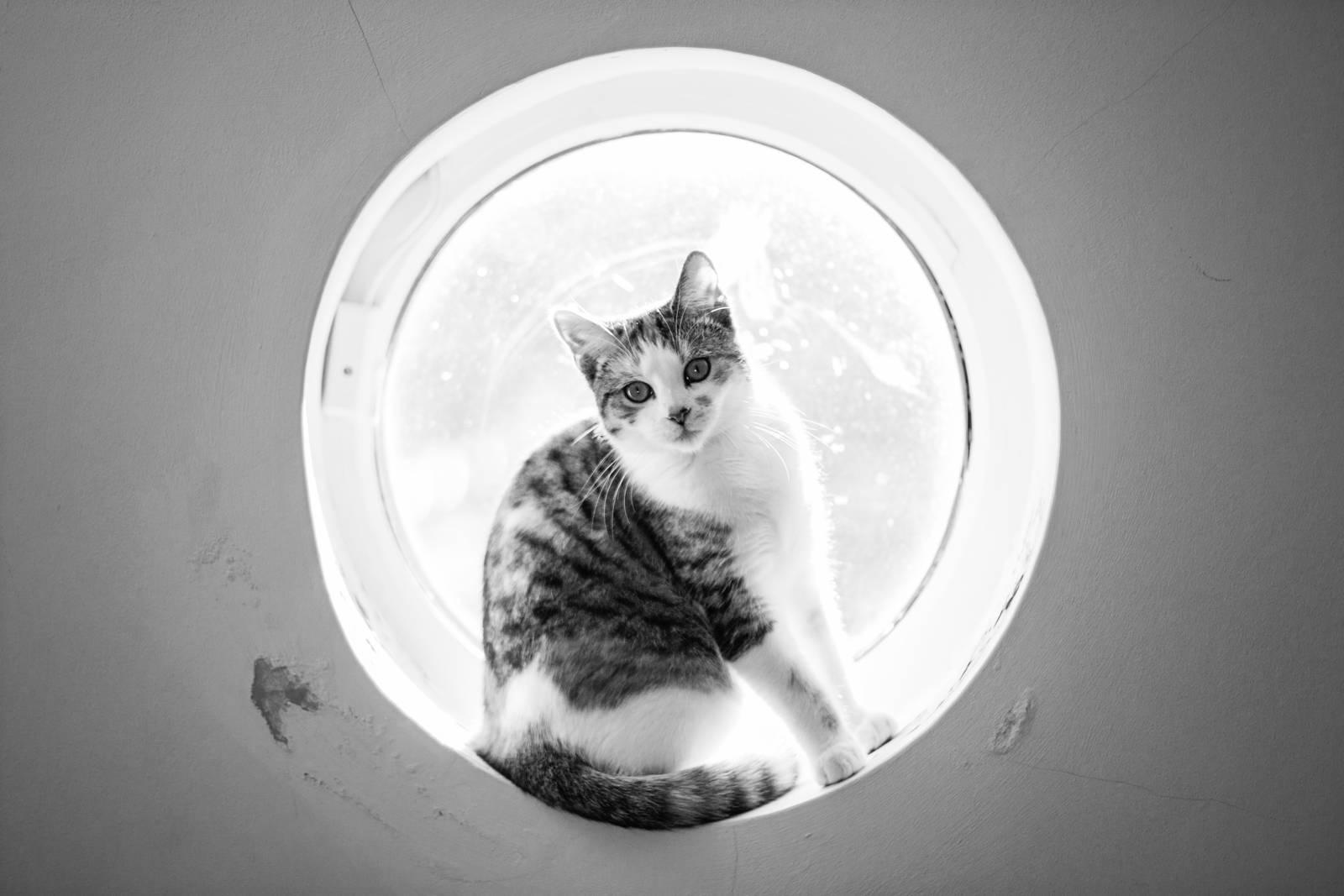Cookie in a windowsill