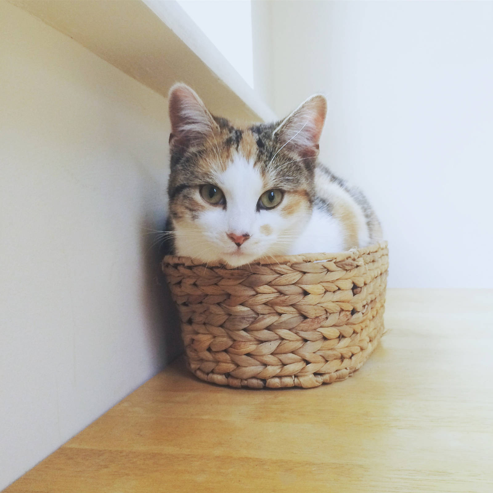 Cookie in a basket