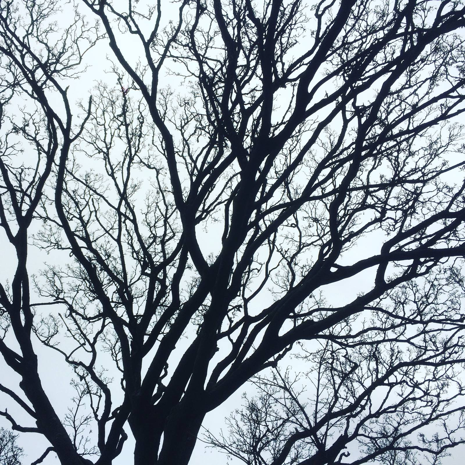 Winter tree, winter sky at Blackrock Park