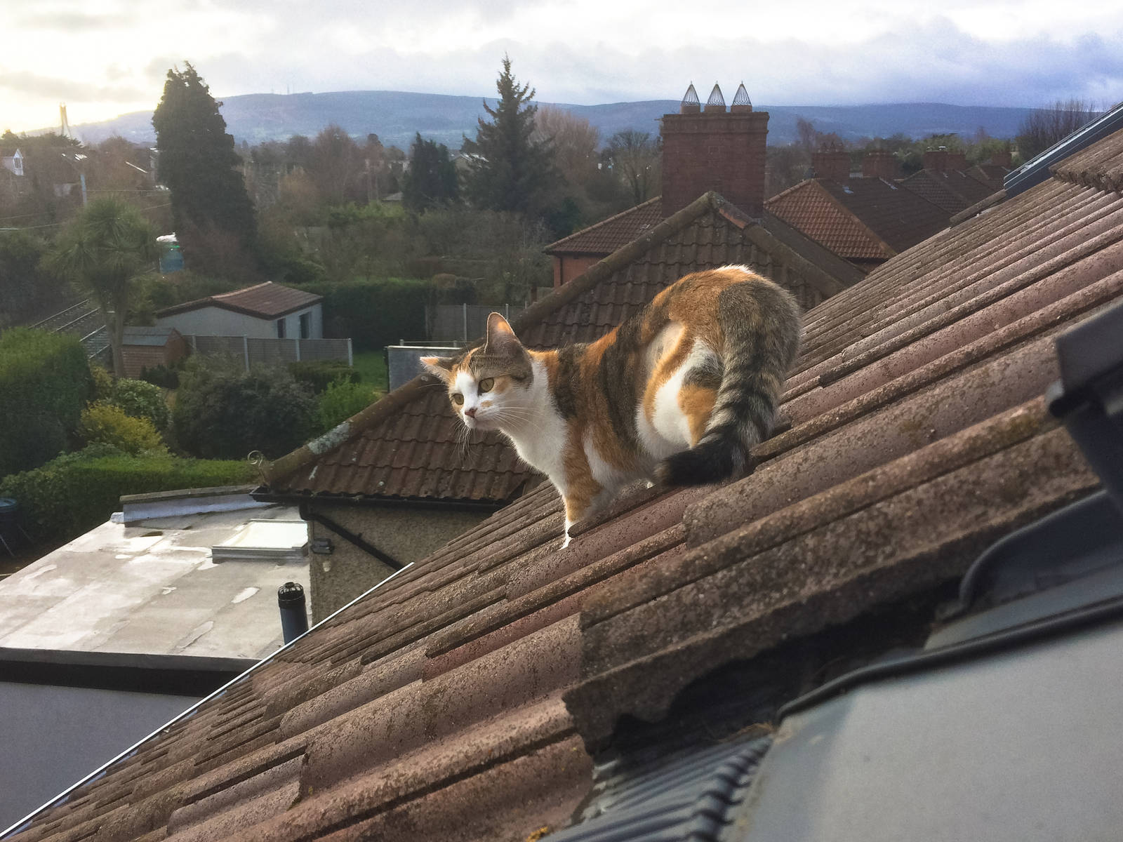 Cookie on the roof of the house, February 28