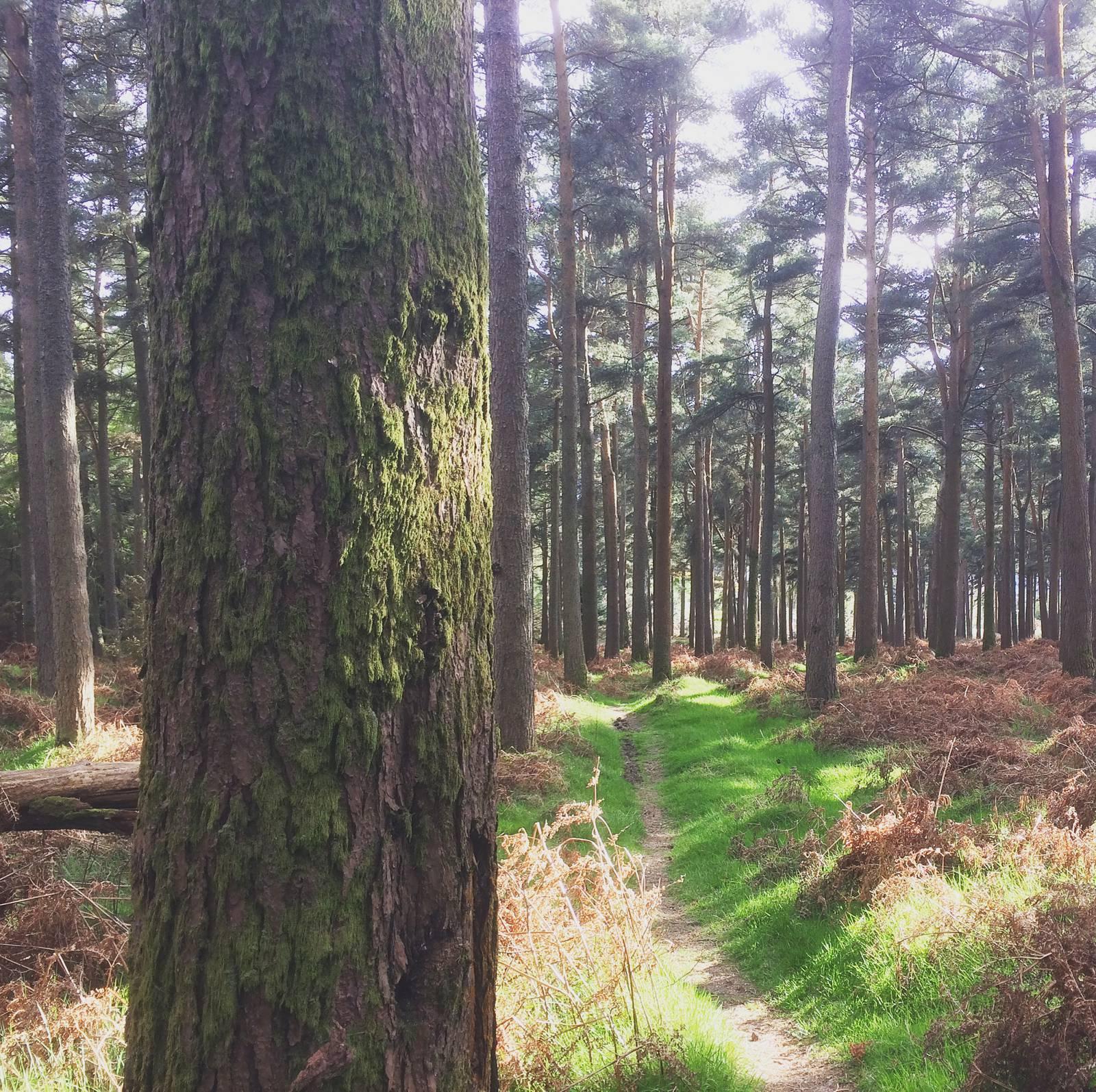Annacrivey Woods