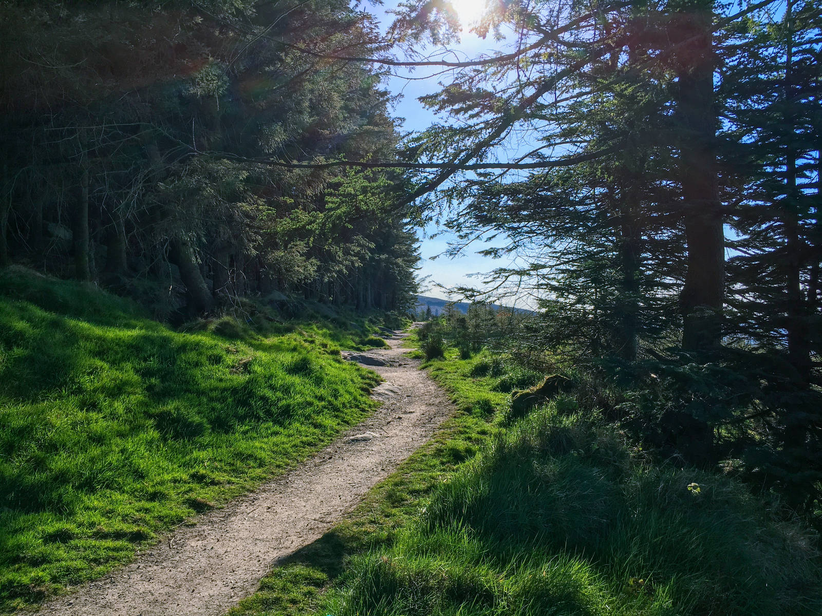 Hillside trail at Ticknock