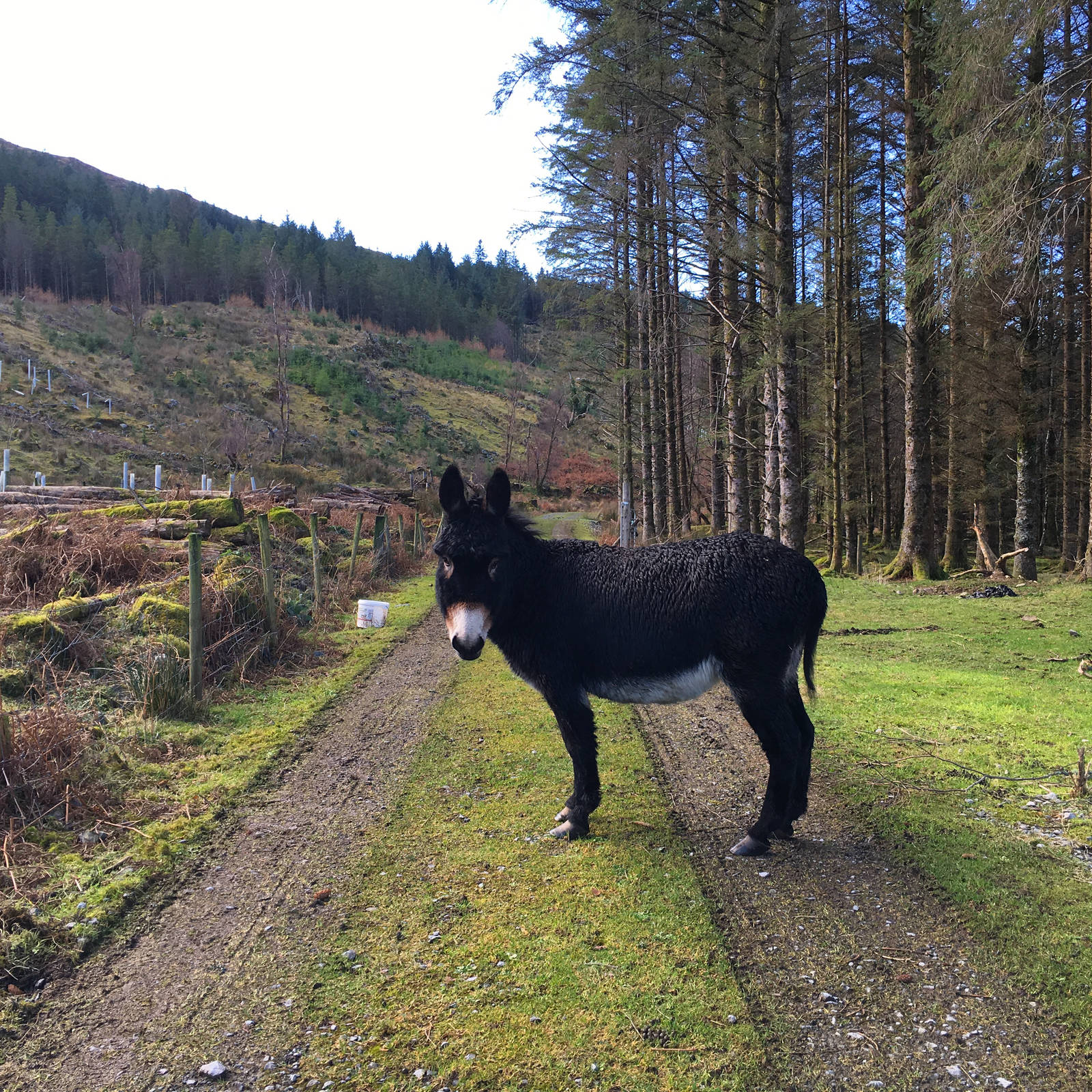 Donkey on the trail at the Hill of Doon
