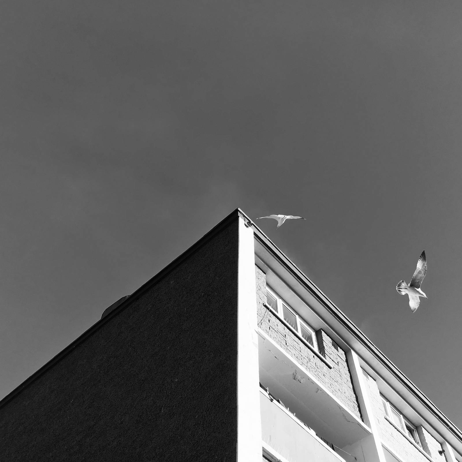 Rooftop and two seagulls at Usher's, Dublin