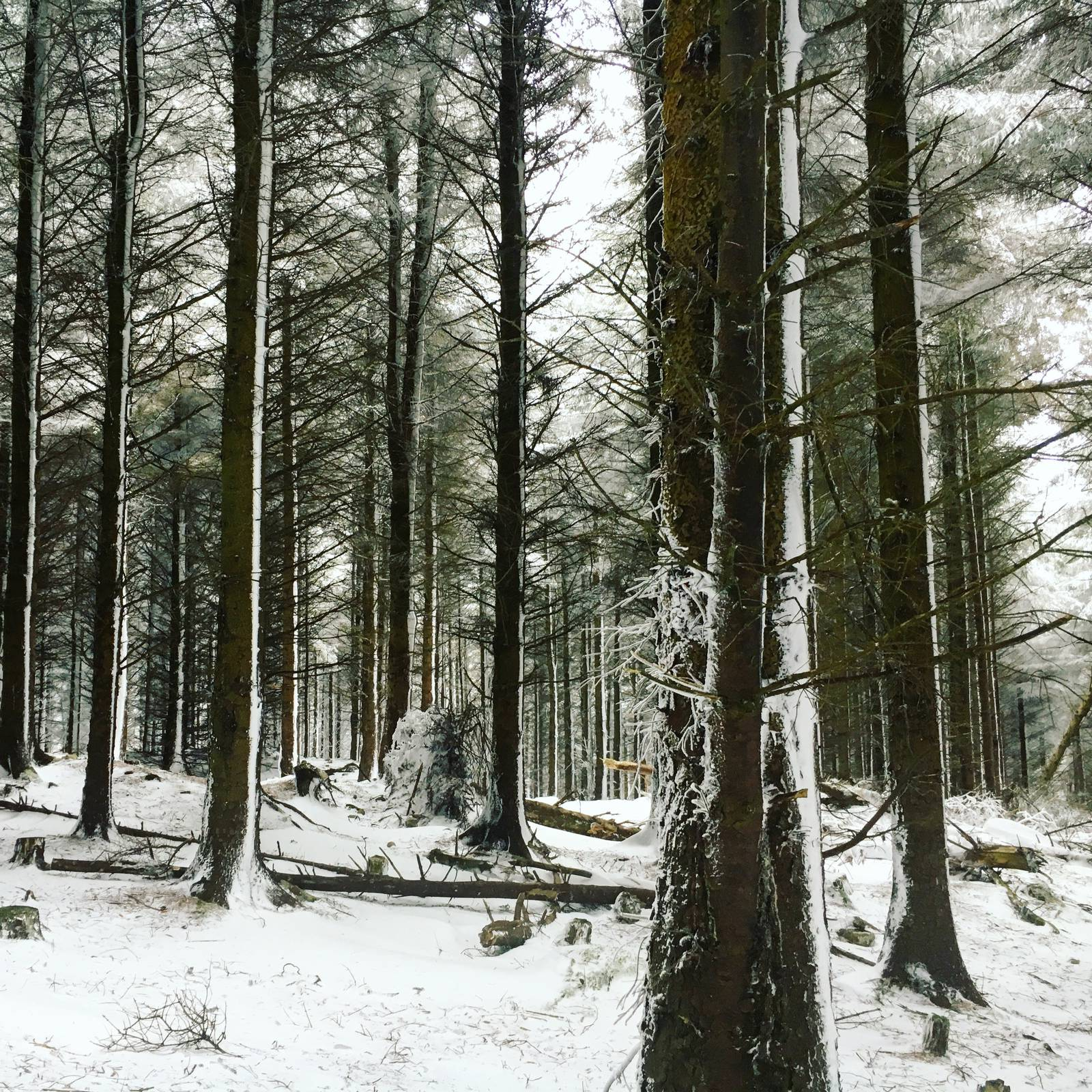Ticknock Forest in the snow