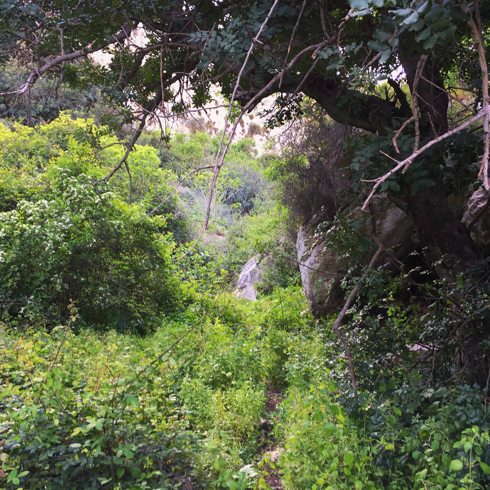 Verdant undergrowth in Mgarr ix-Xini gorge