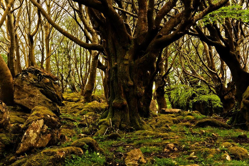 Menlo woods