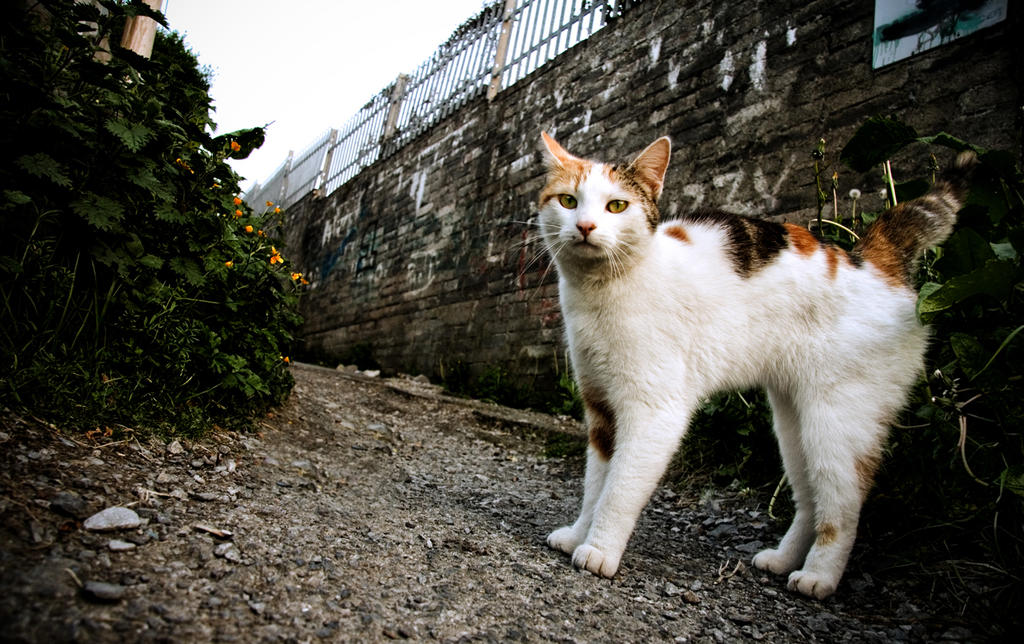 Calico behind Tesco in Galway