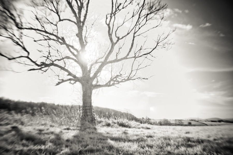 Sunrise tree at Renville