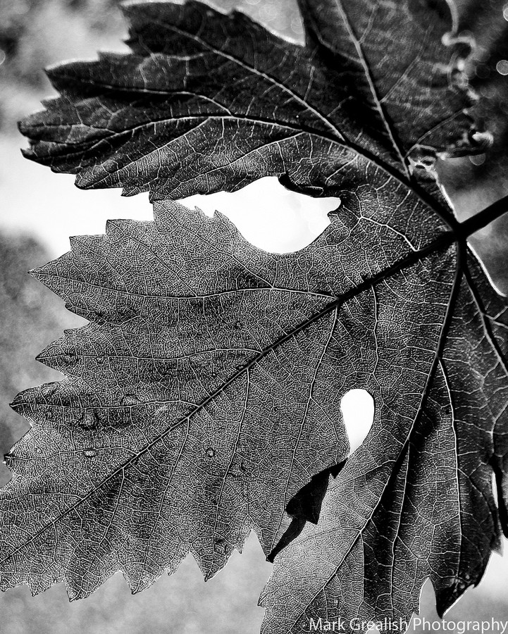 Falling Leaf Black and White