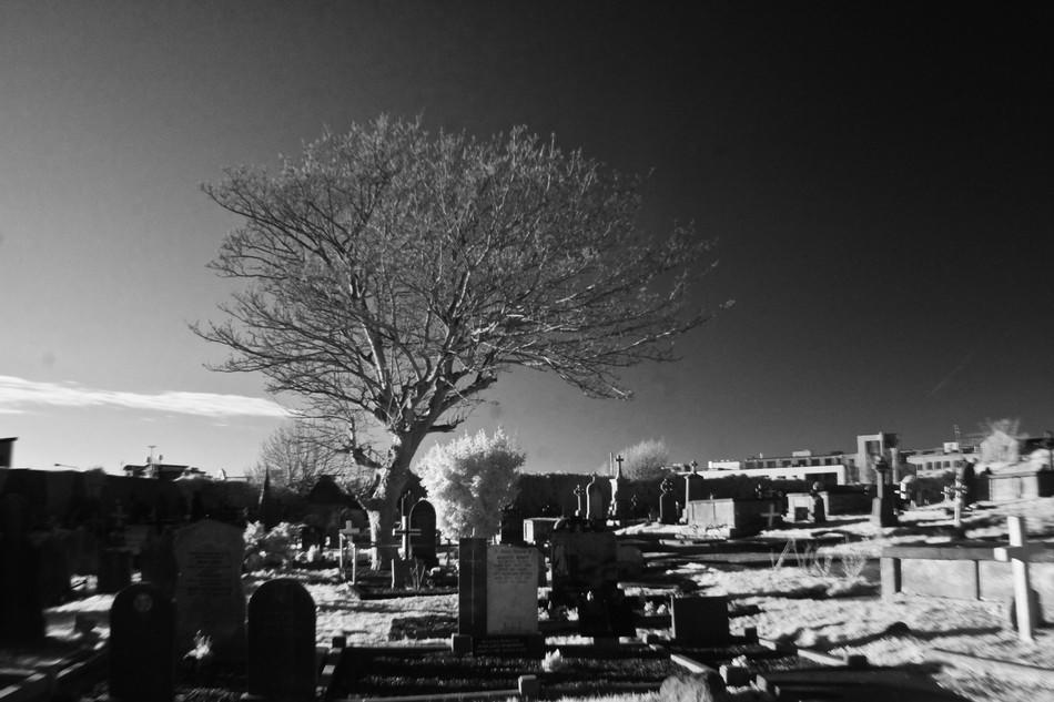 Day 3: Forthill Cemetery