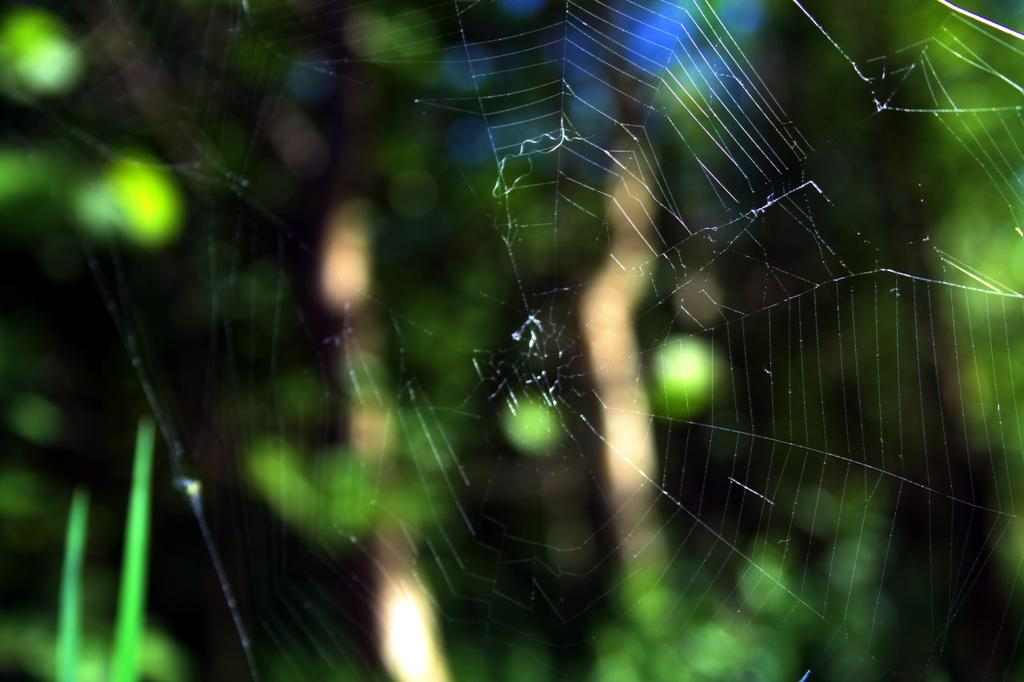 A spiderweb in Galway
