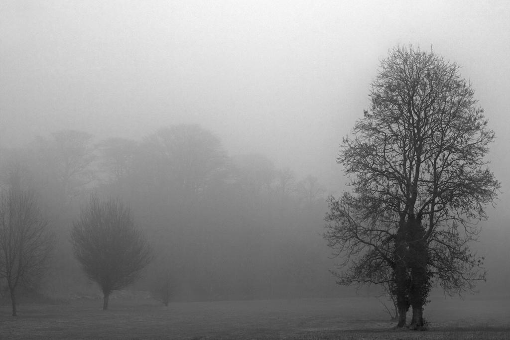 Trees through the fog